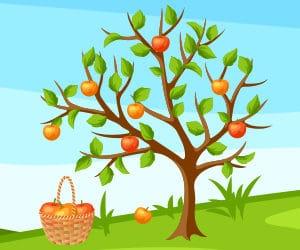Stieglerhaus Apfelernte